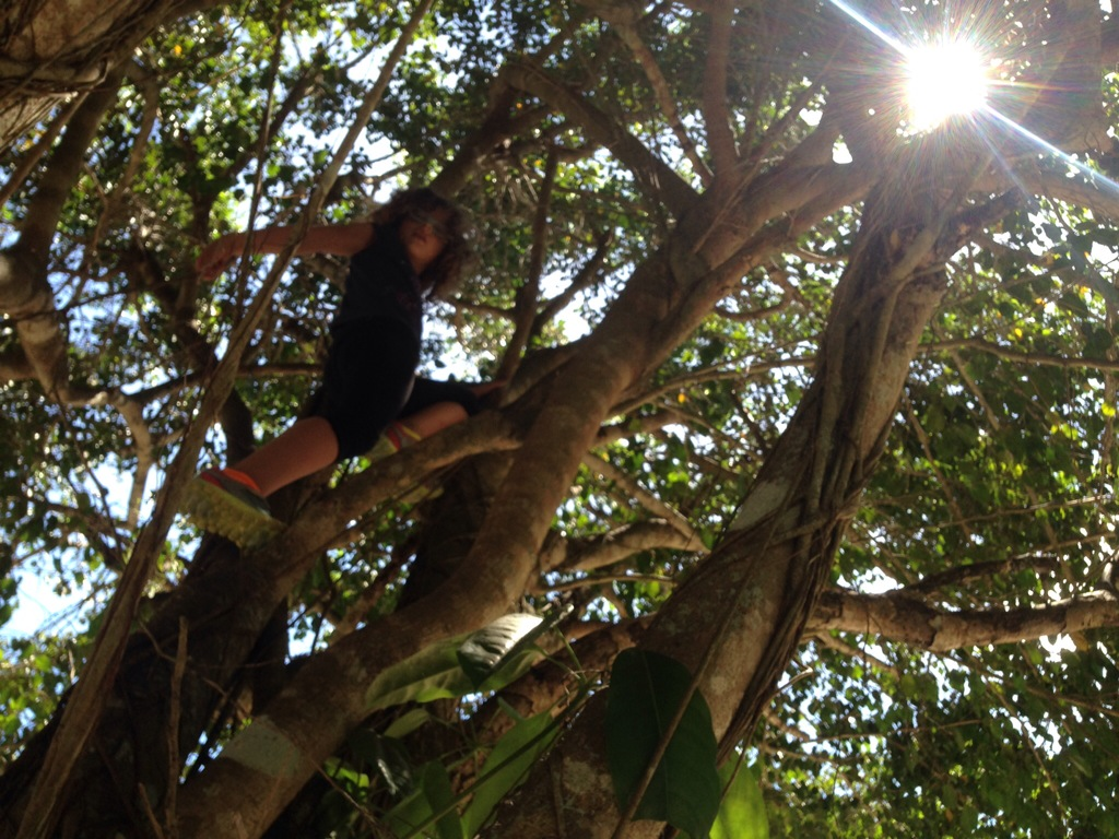 We climb trees. We observe them carefully.